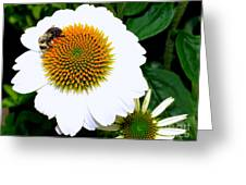 Beauty And The Bee #2 Greeting Card
