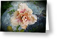 Beauty And The Boulder - Daylily Greeting Card