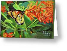 Beauty Attracts Greeting Card