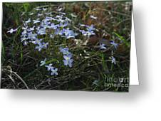 Beauty Blue Flowers Greeting Card