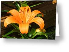 Beauty By The Fence Greeting Card