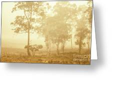 Beauty In A Forest Fog Greeting Card