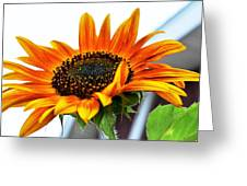 Beauty In A Sunflower Greeting Card