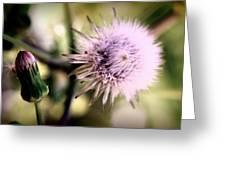 Beauty In Everything Greeting Card