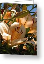 Beauty In Life Greeting Card