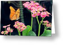 Beauty In Motion Greeting Card by Garvin Hunter