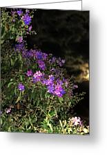 Beauty In The Night Time Greeting Card