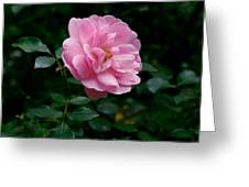Beauty In The Rainforest Greeting Card