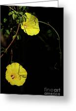 Beauty In The Shade Greeting Card