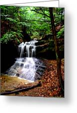 Beauty In The Woods Greeting Card