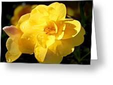 Beauty In Yellow Greeting Card