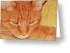 Beauty Of A Cat Greeting Card