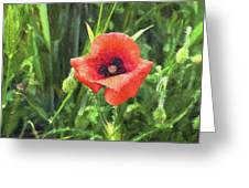 Beauty Of A Poppy  Greeting Card