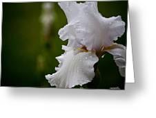 Beauty Of An Iris Greeting Card