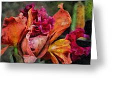 Beauty Of An Orchid Greeting Card
