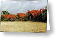 Beauty Of Bougainvillea Greeting Card
