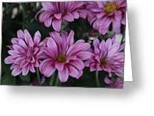 Beauty Of Pink Greeting Card