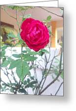Beauty Of  Red Rose  Greeting Card