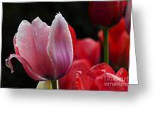 Beauty Of Spring Tulips 1 Greeting Card