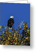 Beauty Of The Bald Eagle Greeting Card