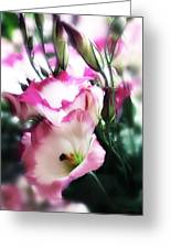 Beauty Of The Day Greeting Card