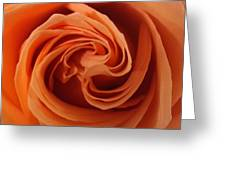 Beauty Of The Rose II Greeting Card