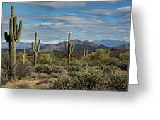 Beauty Of The Sonoran  Greeting Card