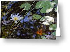 Beauty Of The Swamp Greeting Card