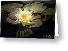 Beauty Of The Water Lily Greeting Card
