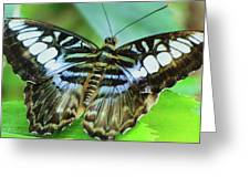 Beauty On The Wing Greeting Card
