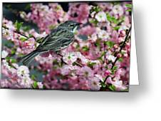 Beauty Rest Greeting Card