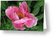 Beauty Revealing Itself  Greeting Card
