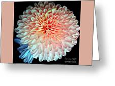Beauty The Round Greeting Card