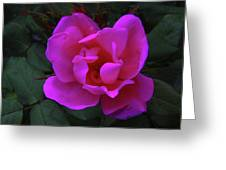 Beauty Unfurls Greeting Card