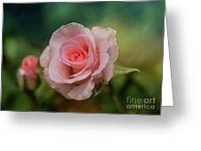 Beauty With Raindrops Greeting Card