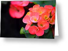 Beauty And Thorns Greeting Card