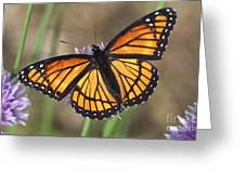 Beauty With Wings Greeting Card