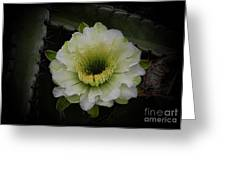 Beauty Within Greeting Card