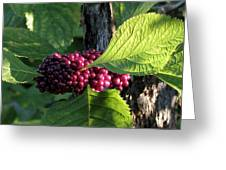 Beautyberry 2 Greeting Card