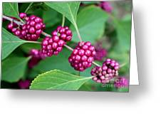 Beautyberry Bush Greeting Card
