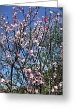 Beautiful Spring. Blooming Tree 2 Greeting Card