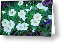 Beauyiful Petunias Greeting Card