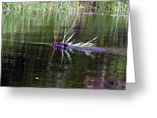 Beaver Carrying A Reed Greeting Card