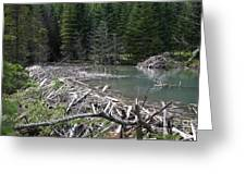 Beaver Dam And Lodge Greeting Card