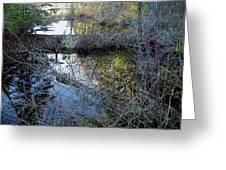 Beaver Dam Greeting Card