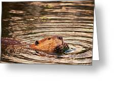 Beaver Feeding Greeting Card