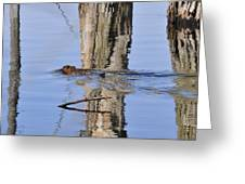 Beaver In Motion Greeting Card