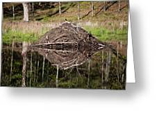 Beaver Lodge Reflection Greeting Card