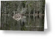 Beaver Lodge Reflections Greeting Card