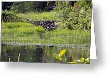 Beaver Pond Scene Greeting Card